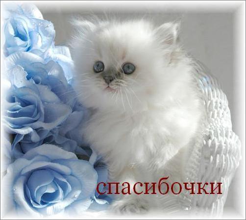 Белок из киски фото 334-246