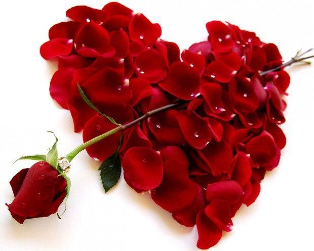 Я тебя люблю сердце роза