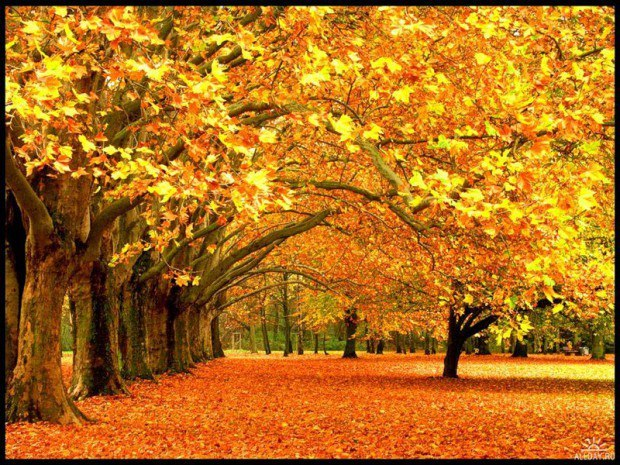 осень желтая картинки
