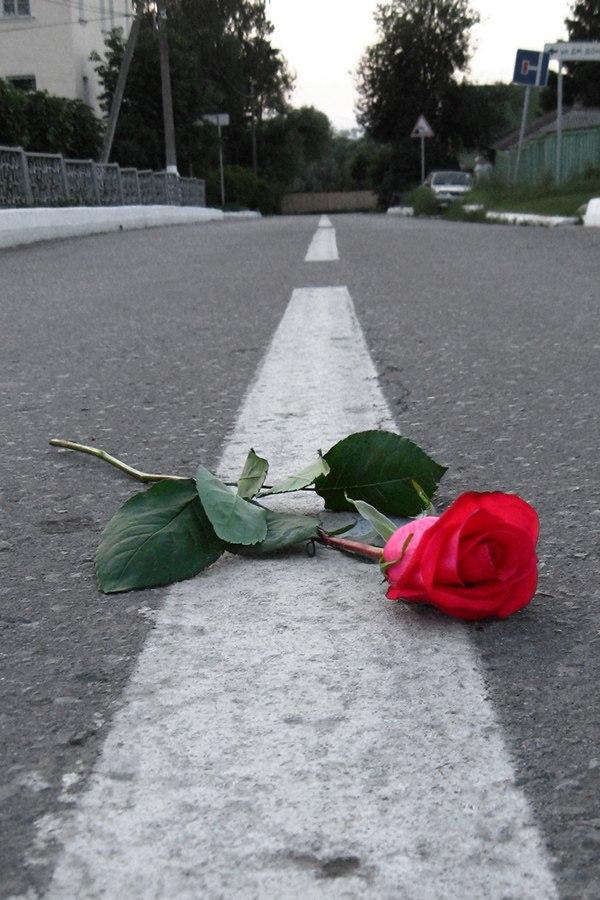 Картинки разбитой любви розы