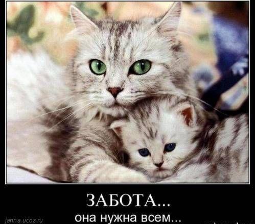 Много забот (Владимир Шебзухов)