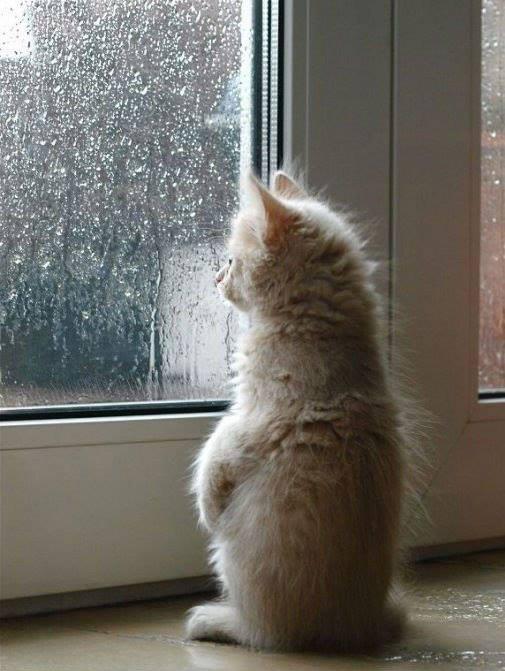 кого наконец то дождь пошел картинки потом