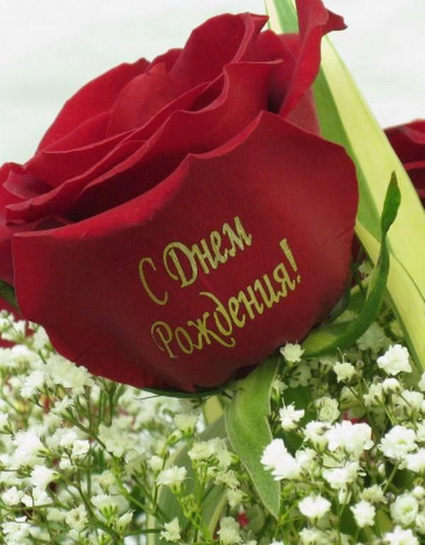 Днем, картинки с надписями на имя роза