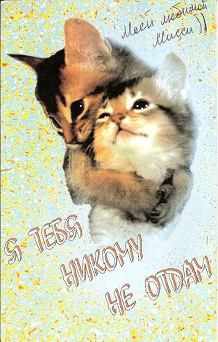 Картинки котику моему, рождения открытки
