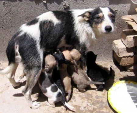 Песнь о собаке (на стихи С.А.Есенина)