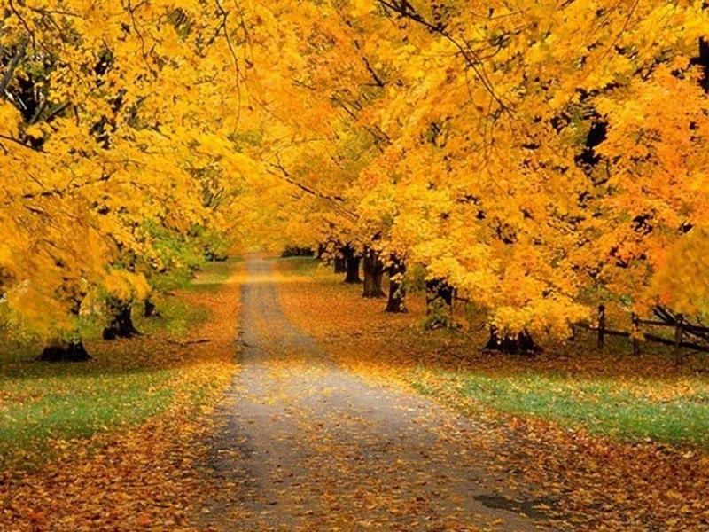 все песни про осень: