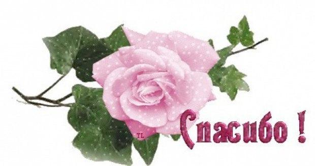 Картинки цветок с надписью спасибо, поздравление