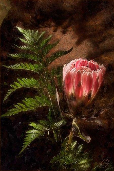 Цветок папоротника на канале