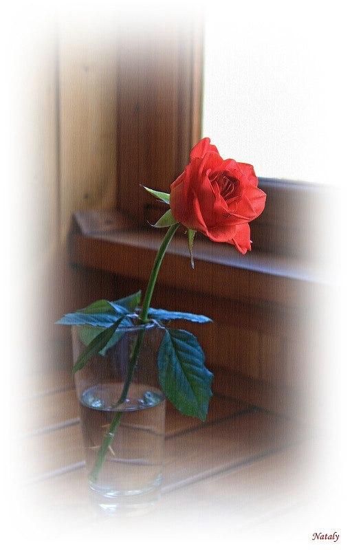 Мраморные розы Щекино вертикальные памятники Альметьевск