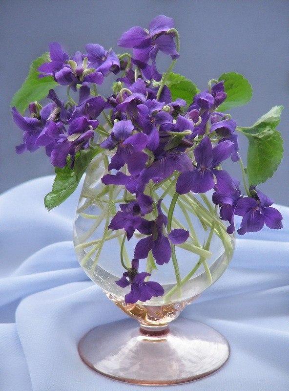 Фото подснежников фиолетовых букет календарь обозначает