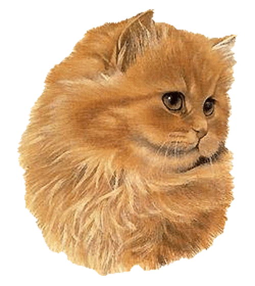 Картинки котиков анимация, ангелочки рисунки