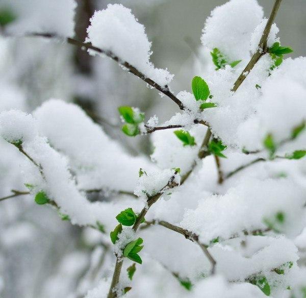 картинки холодный апрель