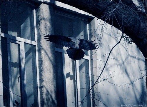 сонник окно стая птиц бились будет показывать московское