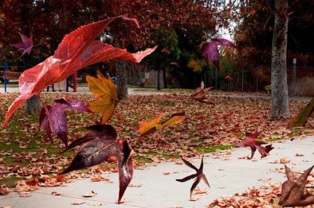 Ветер. Осенние листья.