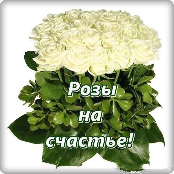 Открытки с пожеланиями счастья с розами, воскресение открытки поздравления