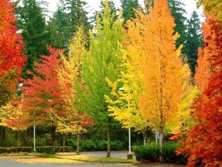 Разноцветие поры осенней
