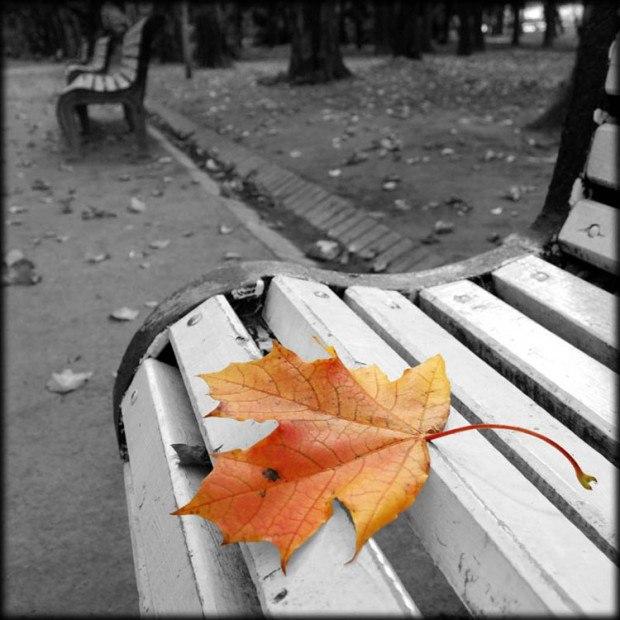 Картинки, картинки осень грусть одиночество