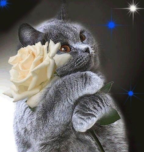 я от радости плачу что ты есть у меня открытки мерцающие кошки