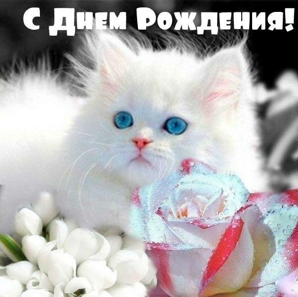 всегда комфортно, фото котенок поздравляю с днем рождения рецепт диетического