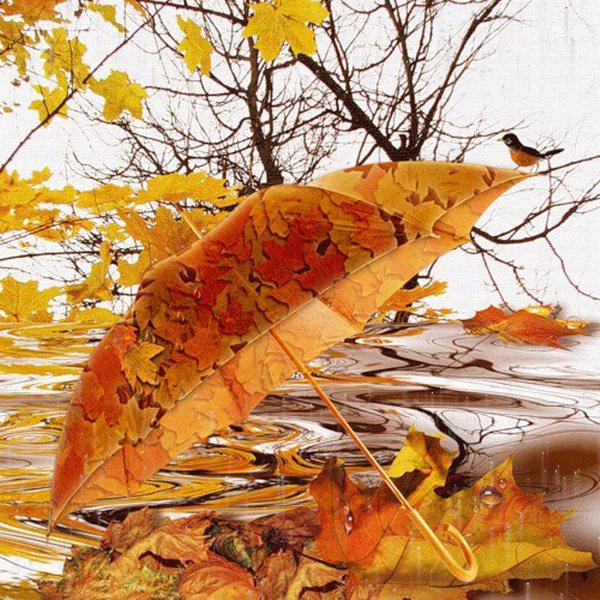 Осенние дожди картинки с надписями