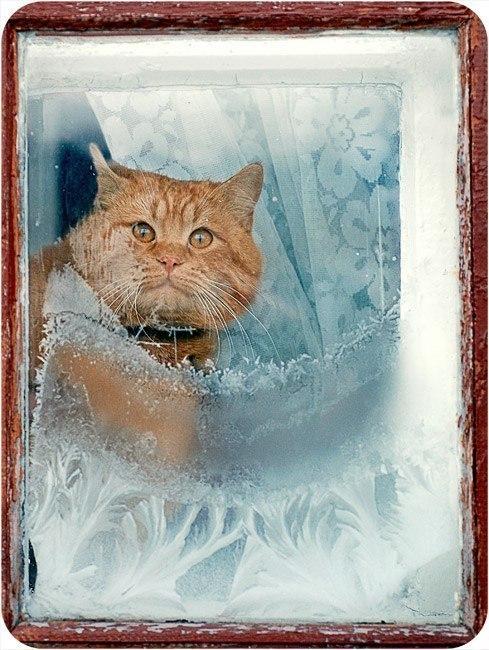 более смешные картинки про холод мороз с надписью кажется