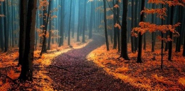 Ранней осенью в лесу...