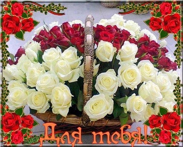 Фото цветы для лучшего друга