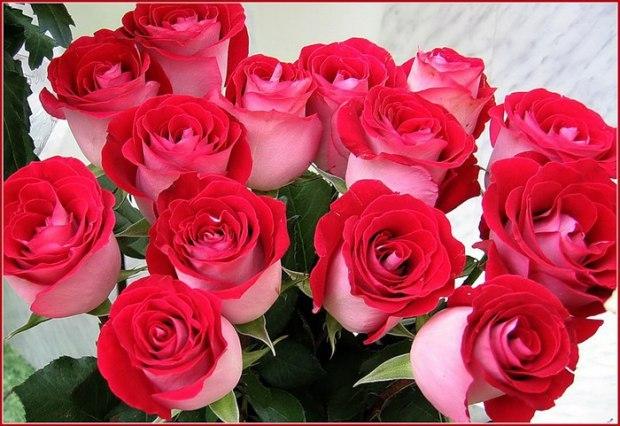 Поздравление 9 роз для тебя 70