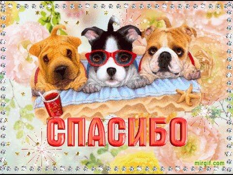 Картинки с животными и надписями спасибо, открытку