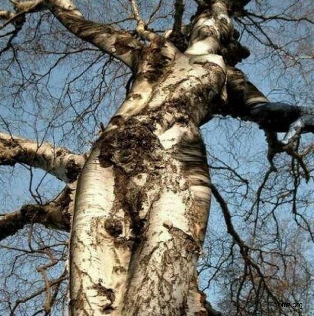 Для мамы, какие есть прикольные картинки с деревом