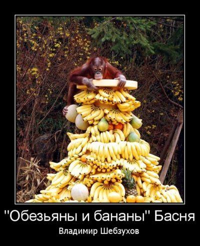 """Басня """"Обезьяны и бананы"""" читает автор (видео)"""