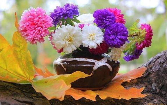 осенние цветы картинки гиф