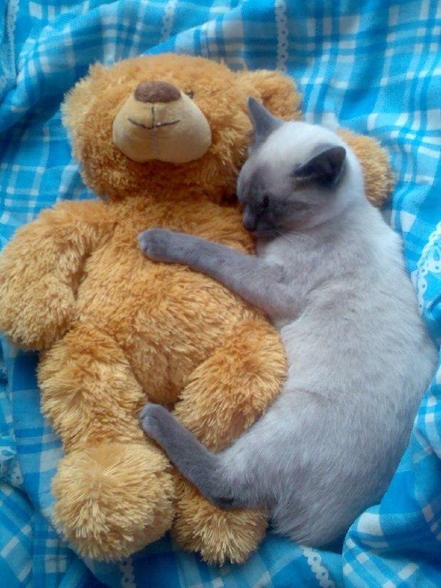 когда хозяева картинки медведь и кошка содержанию это единственная