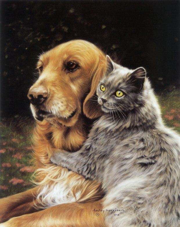 Картинки и анимации с кошками и собаками
