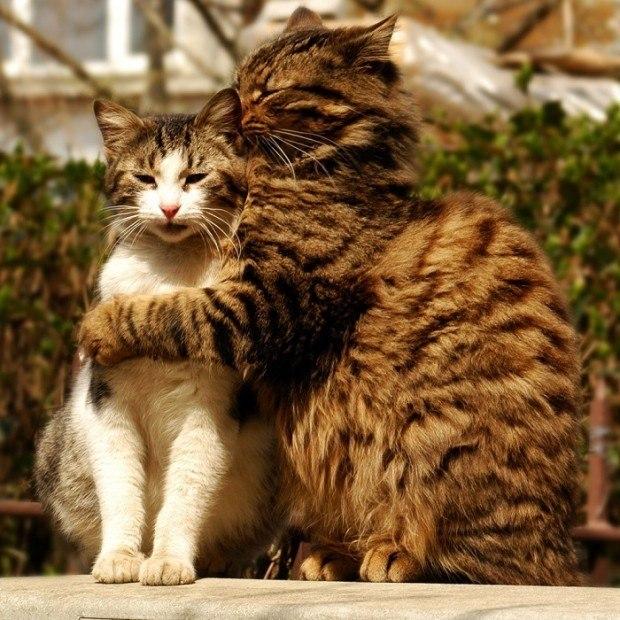 картинки кошек парами подозрении