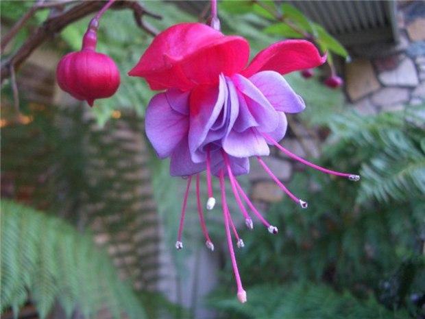 Фото цветов и их информация