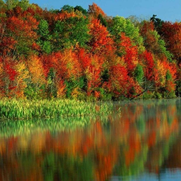 Гифы осень природа, днем