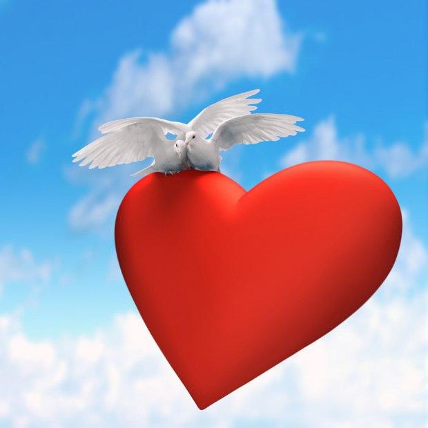 Картинки два голубя в сердцах, февраля сыну картинки