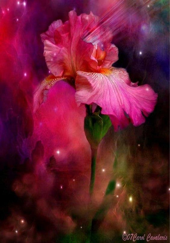 Смешные старушка, сказочный цветок открытка