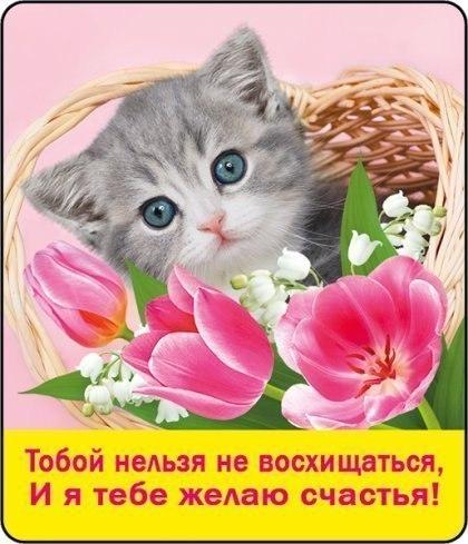 Днем, восхищаюсь тобой открытка