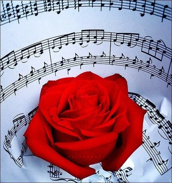 Открытка с музыкой я тебя люблю, днем рождения девушке
