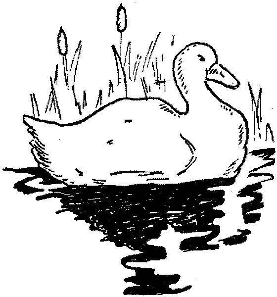 рисунок утка с утятами идут к озеру педагог ольга
