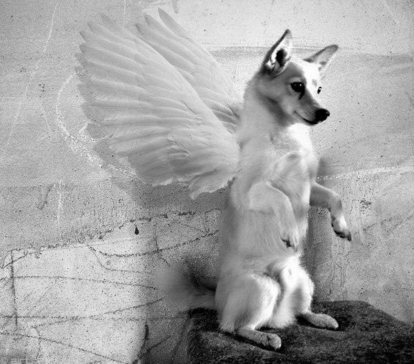 используем картинки об утрате собаки уважением