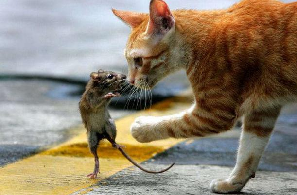 Картинки кошек и мышей смешные