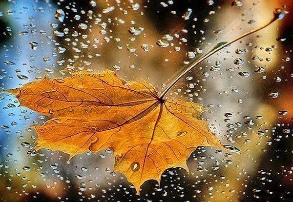 Осень. Грустные картинки