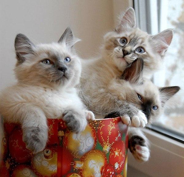 картинки кошечки подружки можно домашних