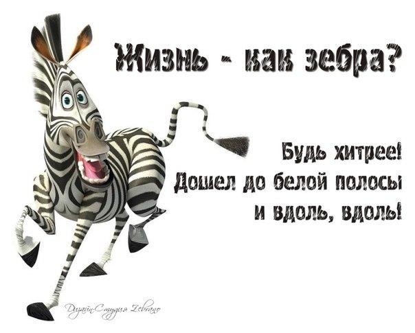 Жизнь полосатая зебра поздравление