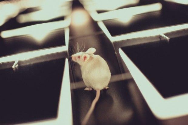 Мышь в лабиринте ~ Проза (Статья)