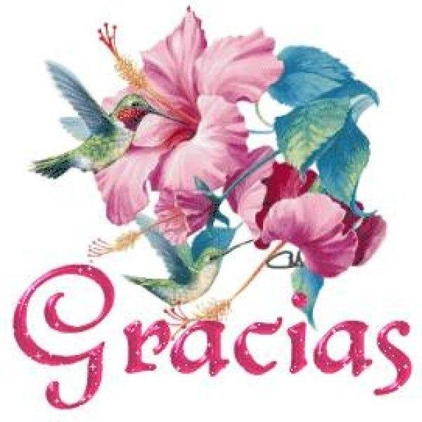 Картинка спасибо на испанском, благодарностью жизнь
