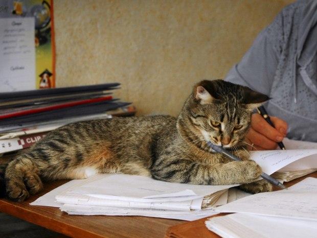 Прежде всего, появление кота говорит о том, что можно положиться на свою интуицию.